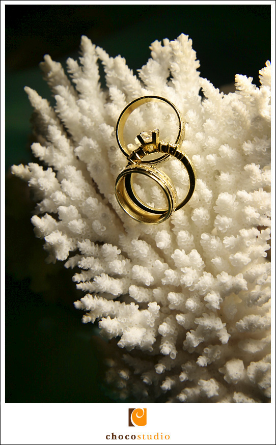 Wedding Rings on a Coral