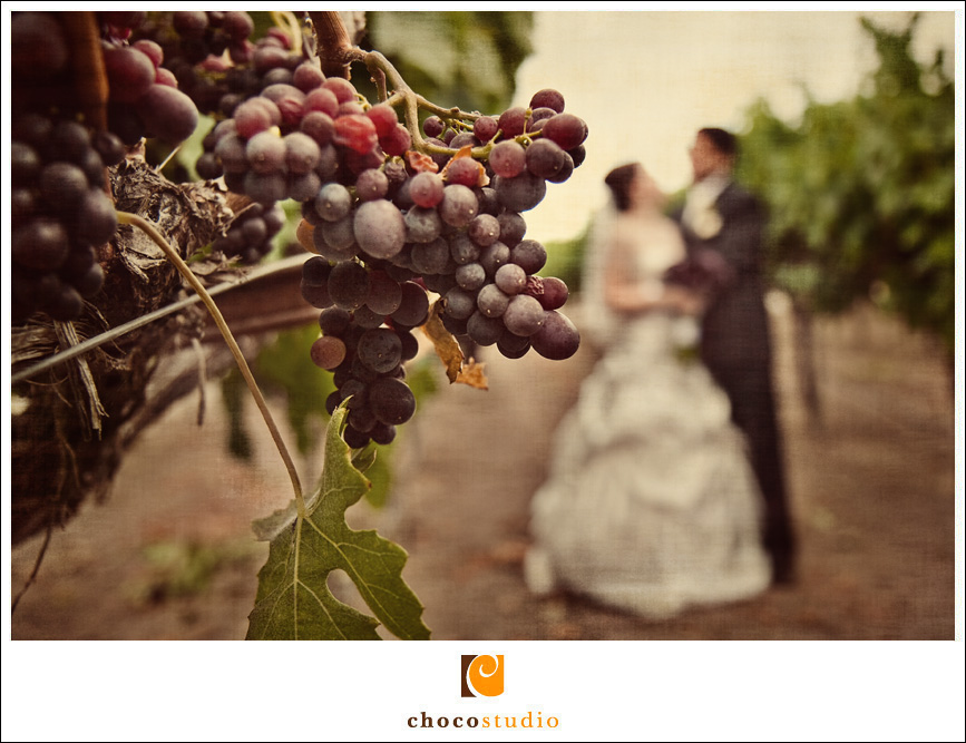 Carmel Valley Vineyard Wedding Photo