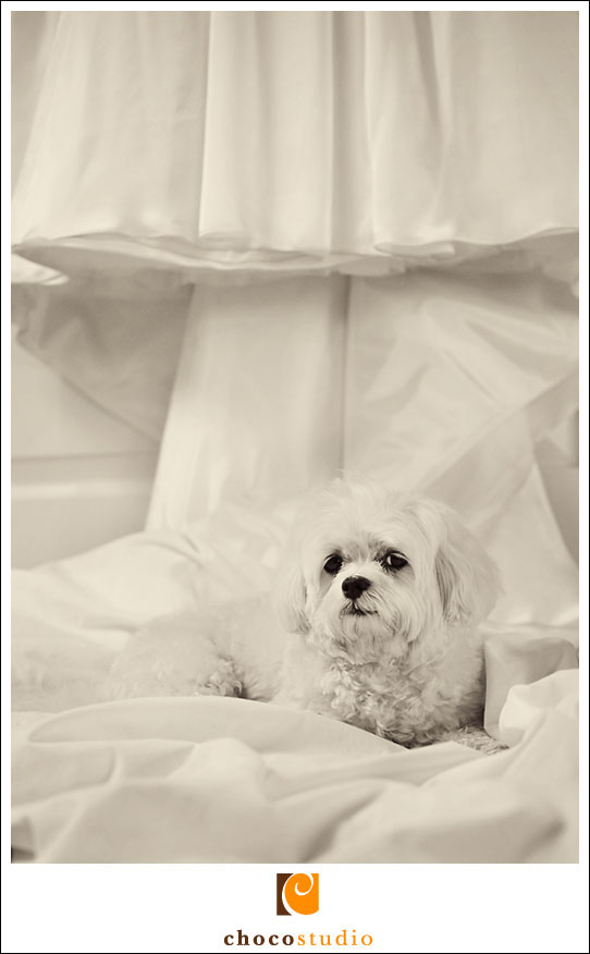 Becca's dog on wedding dress