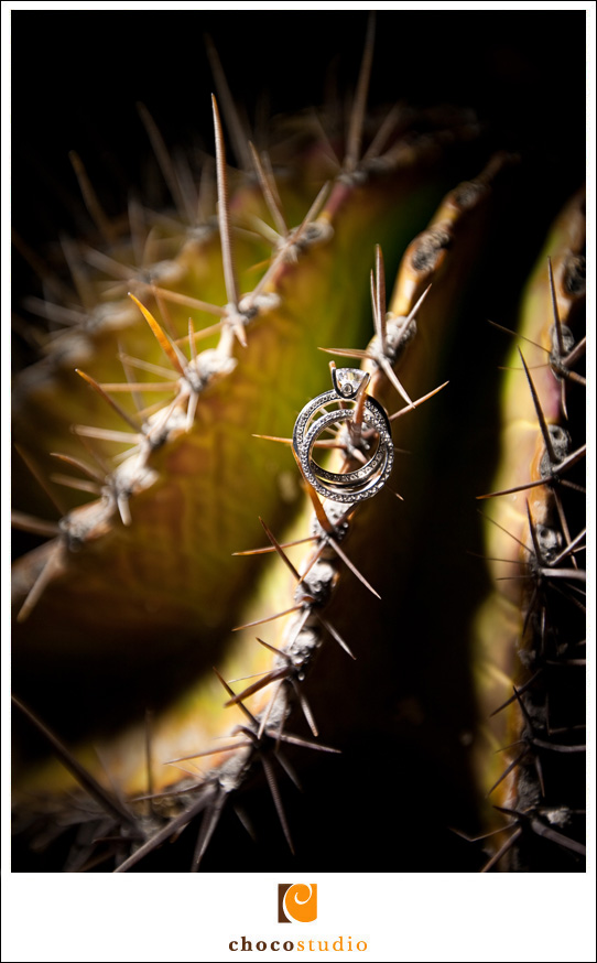 Photo of wedding rings on cactus