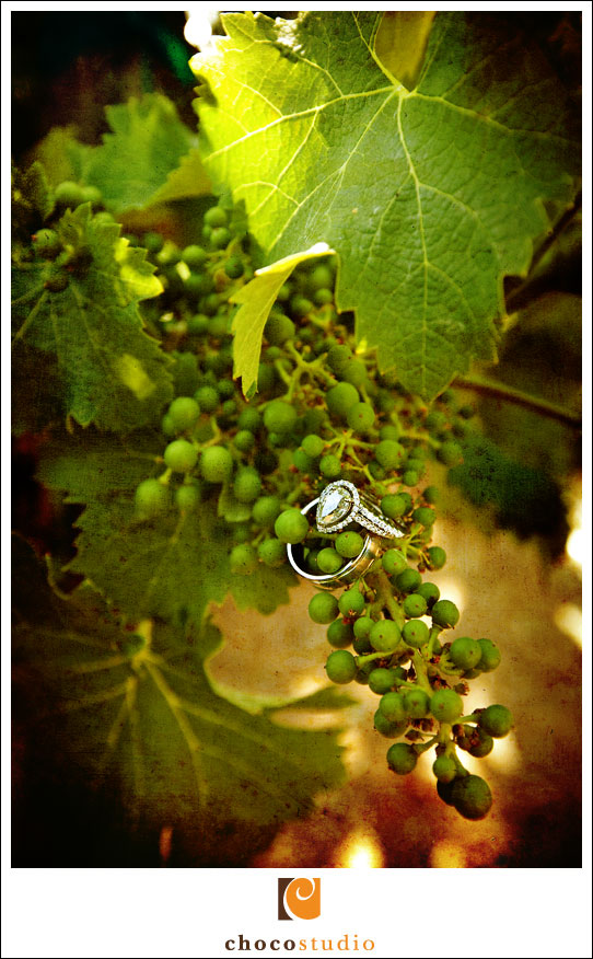 Picture of rings on a grape vine