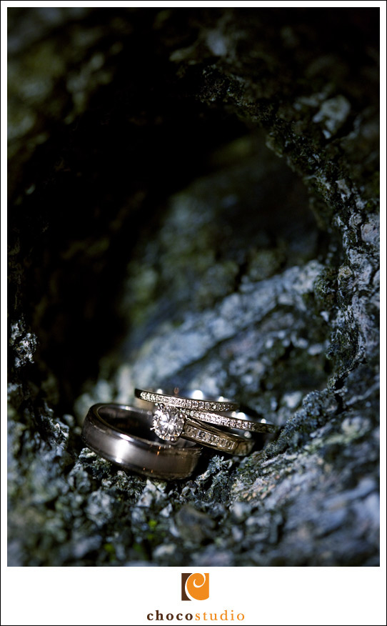 Wedding rings on a tree