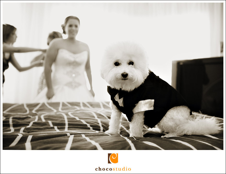 Cute dog ring bearer at a wedding