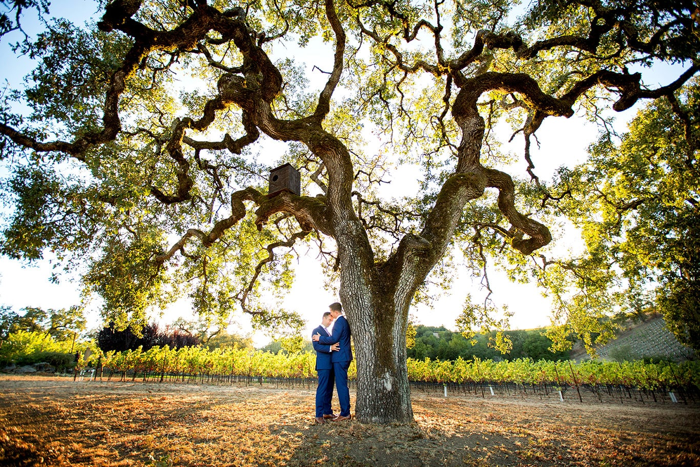 Great Old Oak Tree Wedding Portrait of Two Grooms in Healdsburg Vineyard